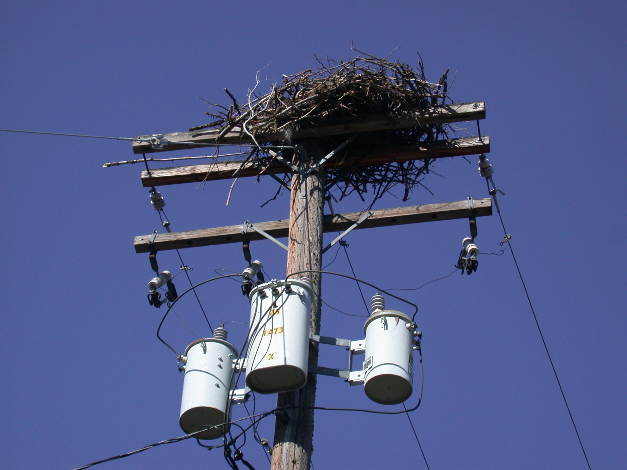 Raptor nest in power lines